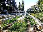 Organic Farming in Kurseong